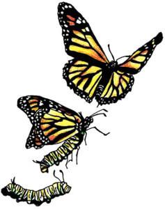 authors-transforming-publishing-landscape